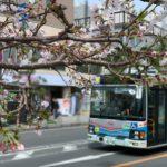 鎌倉散歩 2020年3月28日 外出自粛初日 桜