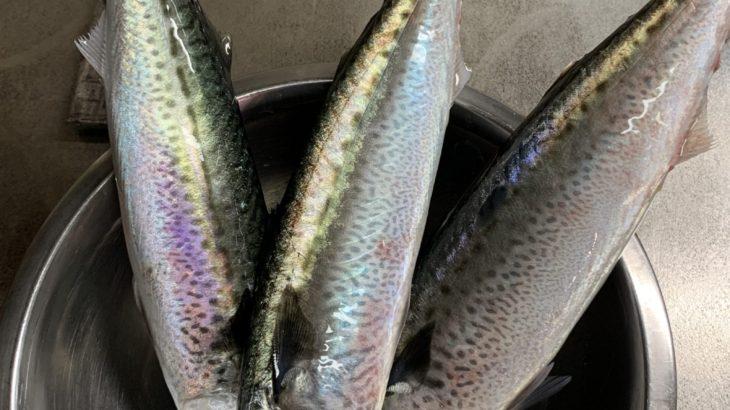腰越漁港 釣った魚 10月下旬 アジ、イワシ、サバ、カワハギ 沖メバル