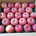 2020 ふるさと納税 12月 サンふじ りんご 10kg 山形県山形市